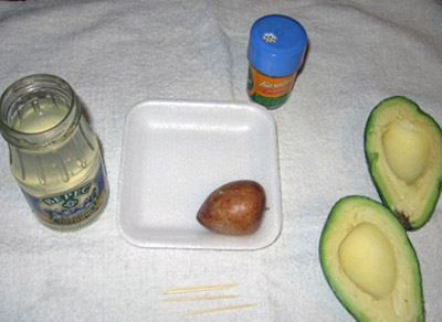 Как вырастить авокадо в домашних условиях?