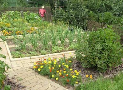 место для огорода