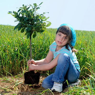 Когда лучше сажать плодовые деревья?