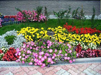 Цветы однолетники