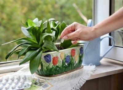 Чем удобрять комнатные цветы?