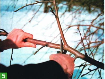 Обрезка садовых растений