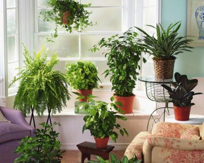 Самые опасные комнатные растения