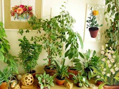 Где и как размещать комнатные растения?