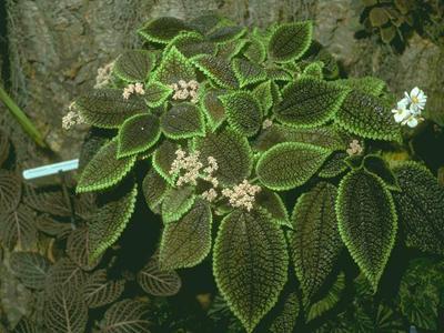 Комнатные цветы цветоводство и